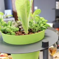 plante-aquaponie-urbanleaf